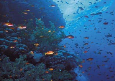 Nos premières plongées en aquarium